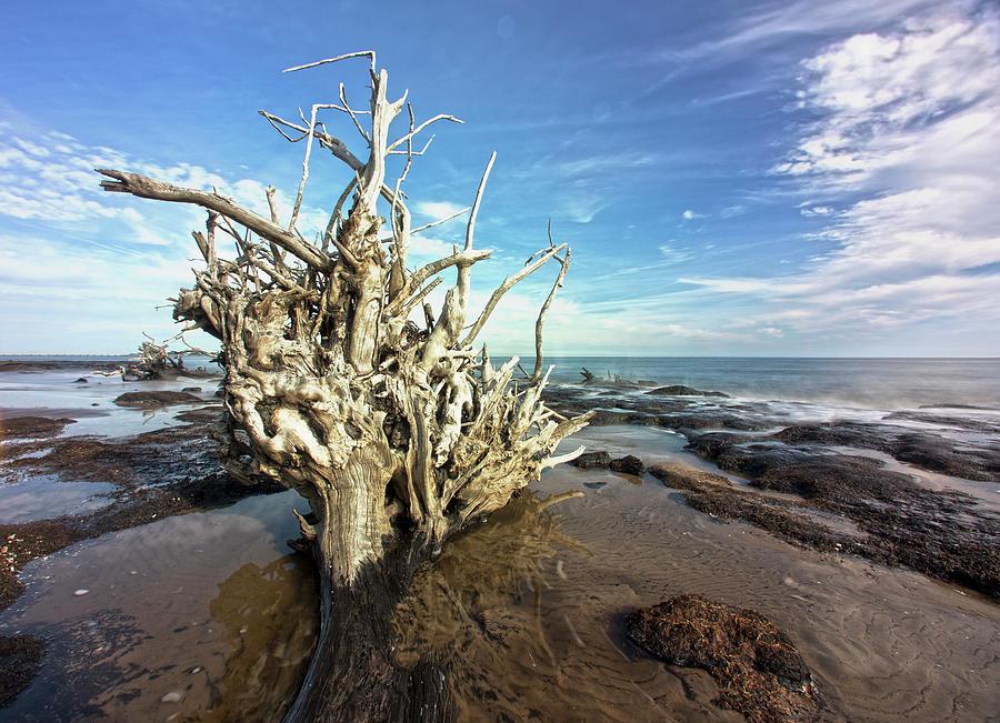 Black Rock Find by Robert Och