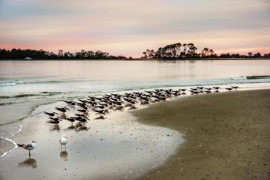 Black Skimmers and Georgia Coast Sunset - Tybee Island by Peter Herman