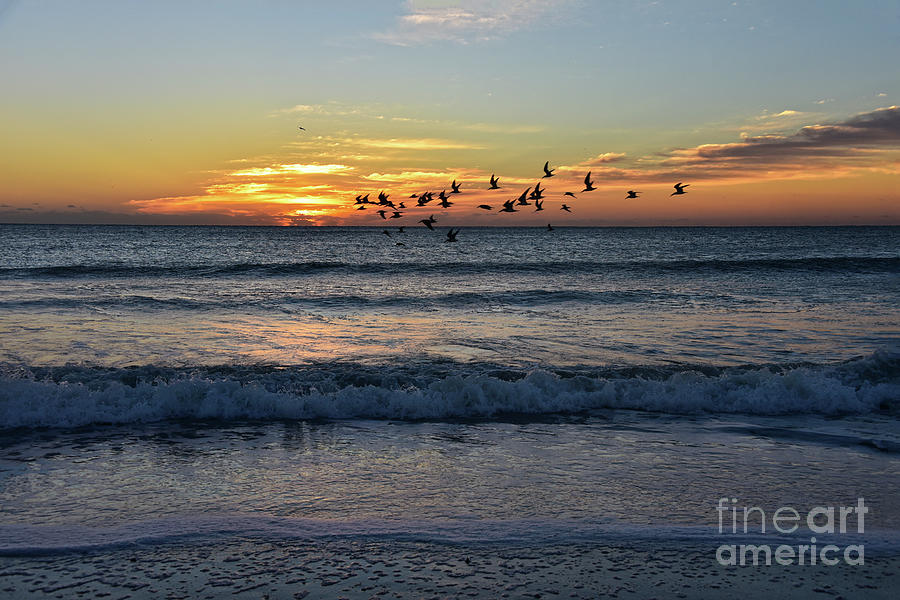 Black Skimmers at Sunrise by Catherine Sherman