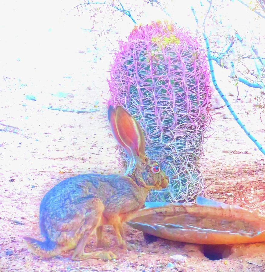 Arizona Photograph - Black-tailed Jackrabbit by Judy Kennedy