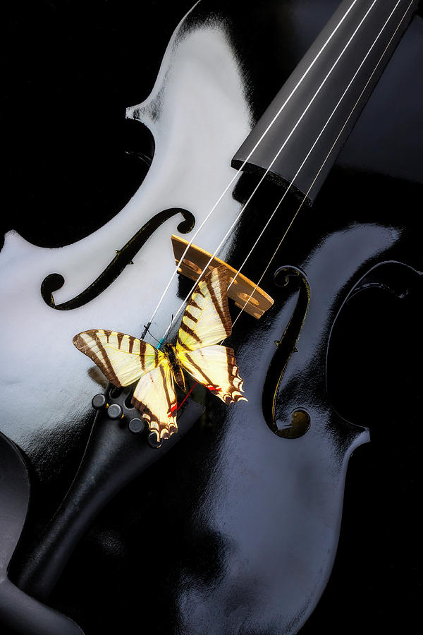 Violin Photograph - Black Vilin And White Butterfly by Garry Gay