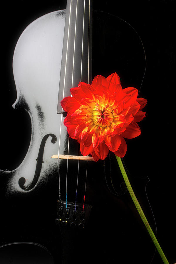 Black Violin And Red Dahlia by Garry Gay