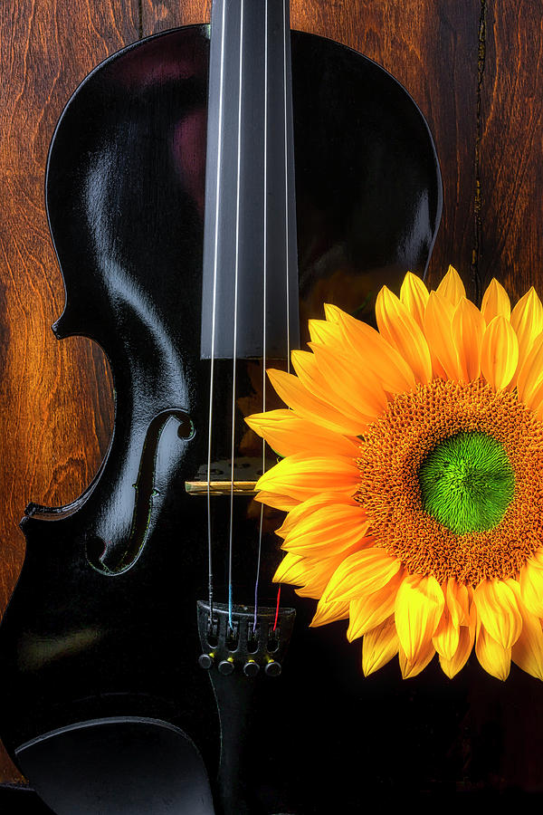 Violin Photograph - Black Violin And Sunflower by Garry Gay