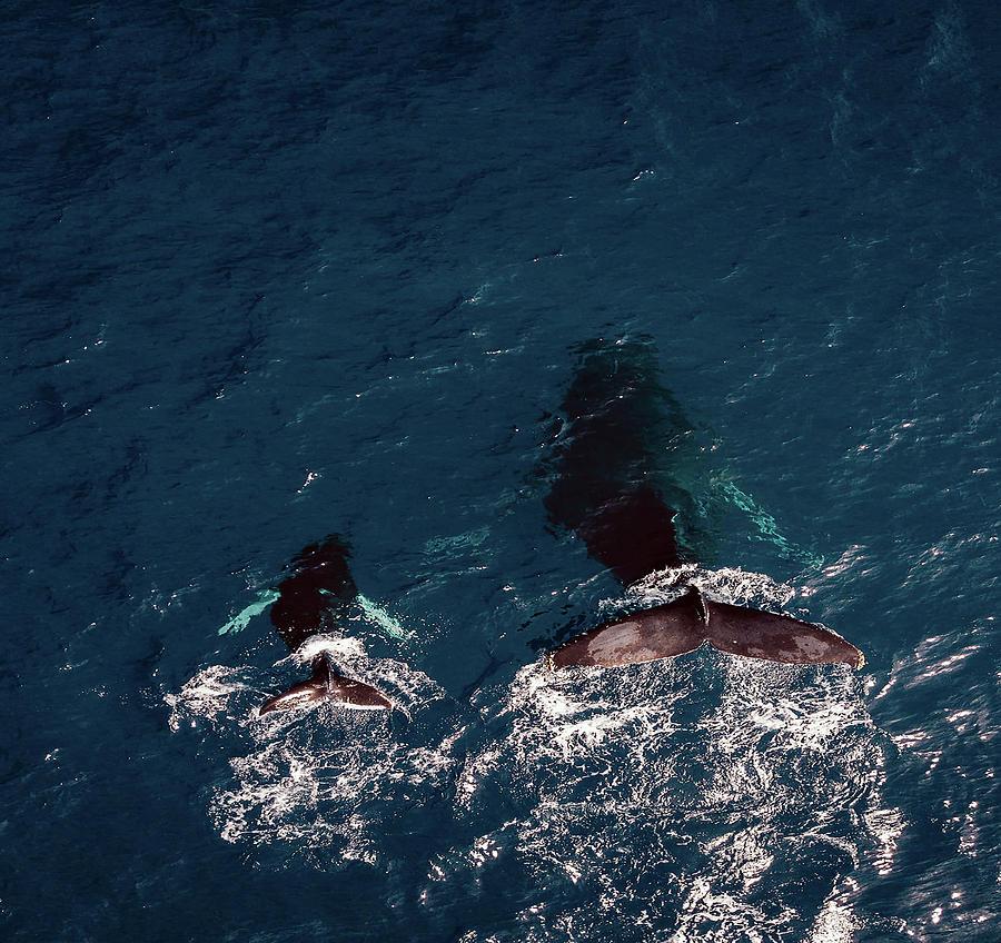 Black Whales by Carlene Smith