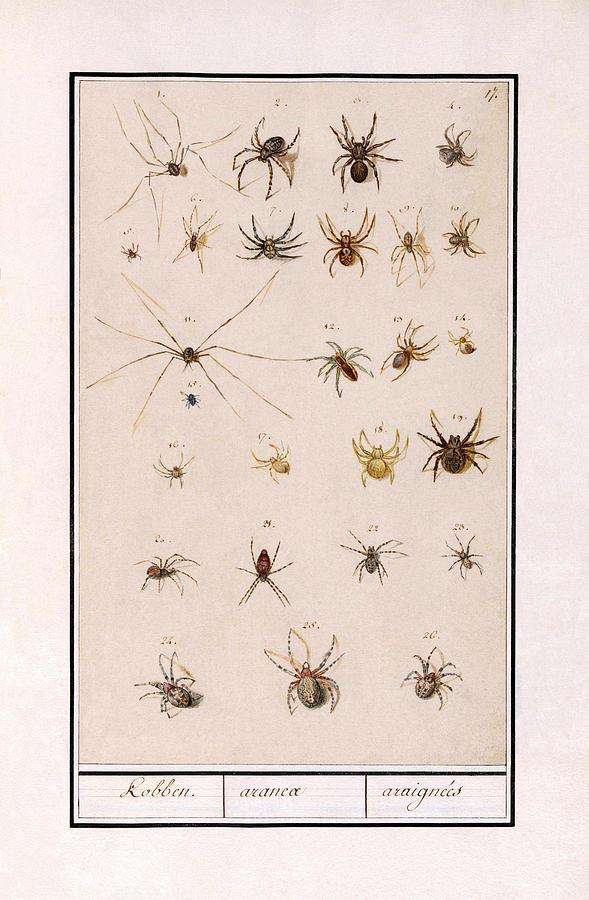 Blad Met Spinnen by Ruth Moratz