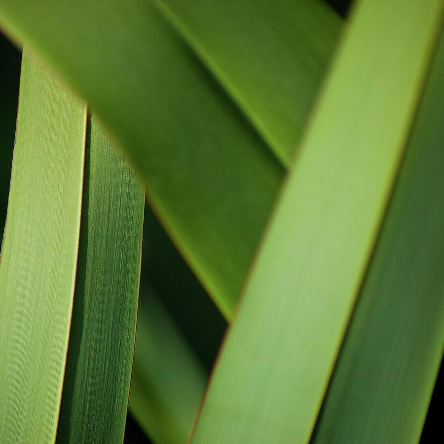 Blades I by Mark Shoolery