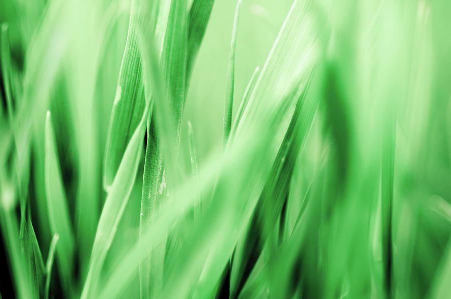Blades Of Grass Photograph by Assalve