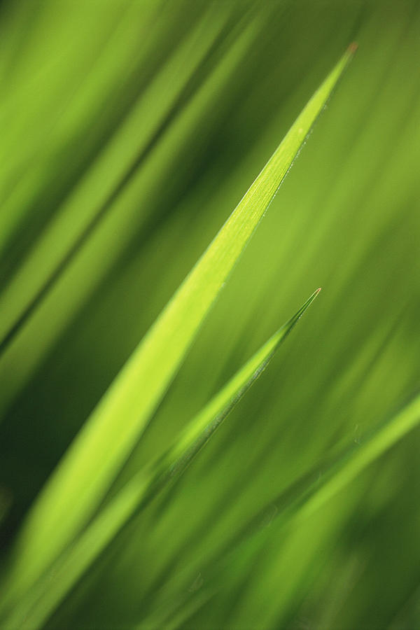 Blades Of Grass, Full Frame Photograph by Kathy Collins