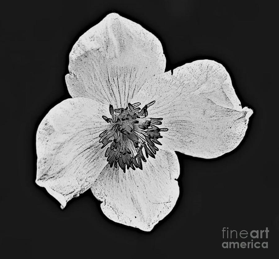 Blanc Fleur by Tracey Lee Cassin