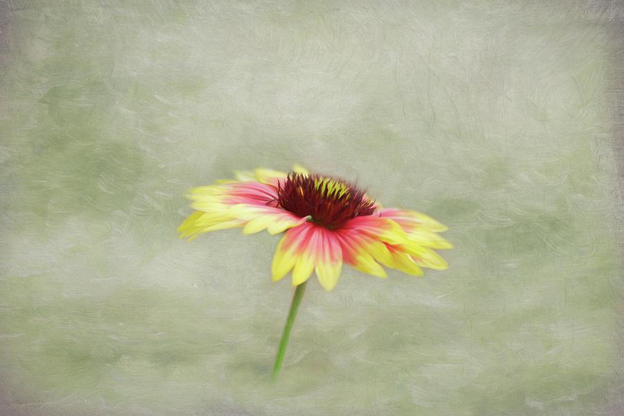 Blanket Flower Beauty by Kim Hojnacki