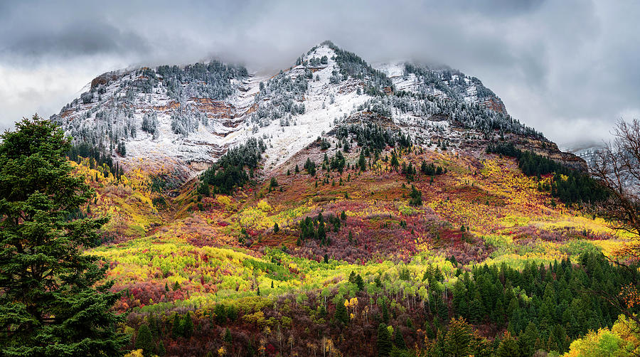 Blending Fall and  Winter by Michael Ash