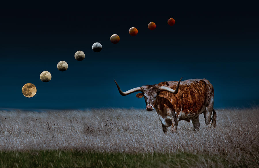 University Of Texas Photograph - Blood Moons In A Texas Sky by Linda Unger