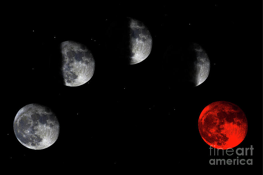 Blood Red Wolf Supermoon Eclipse Series 873h by Ricardos Creations
