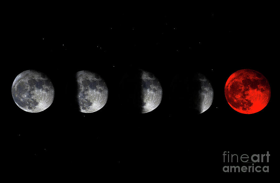 Blood Red Wolf Supermoon Eclipse Series 873j by Ricardos Creations
