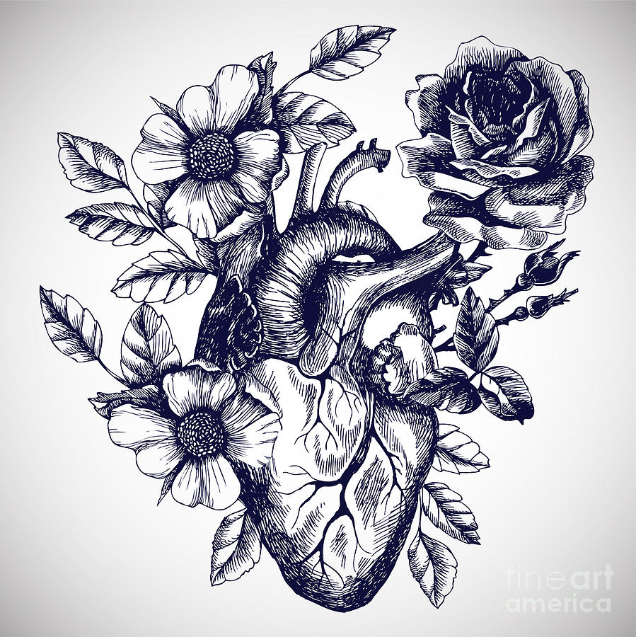 Blooming Anatomical Human Heart Vector Digital Art By Moopsi