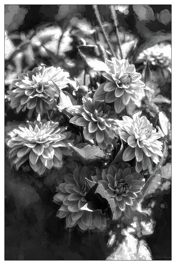 Blooming Black and White by John Rivera