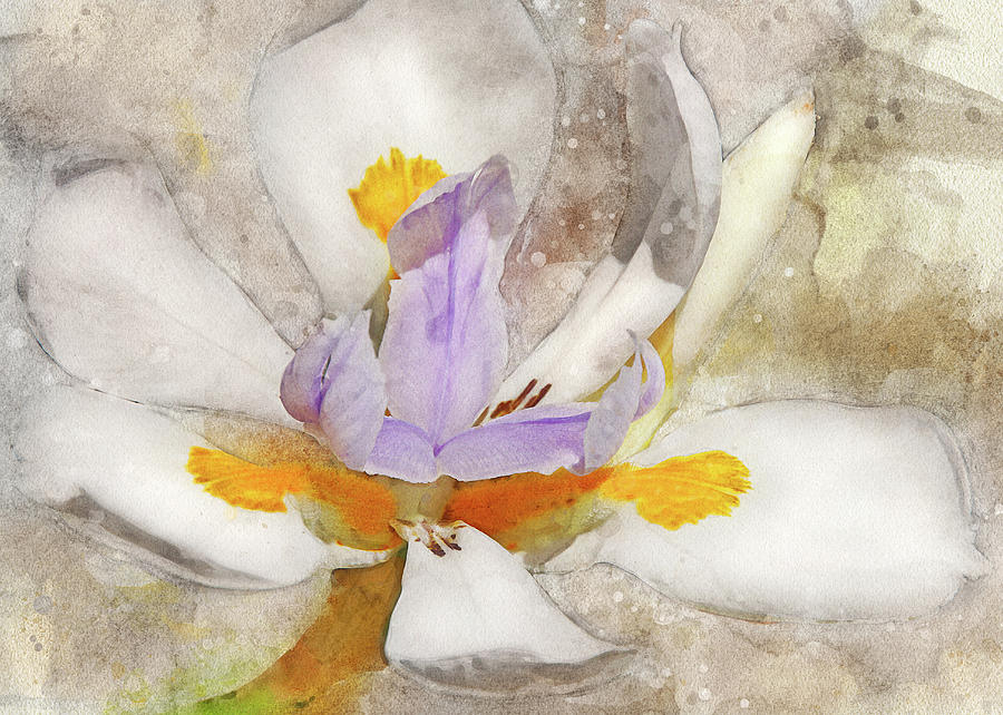 Blooming Into Abstraction by Leda Robertson