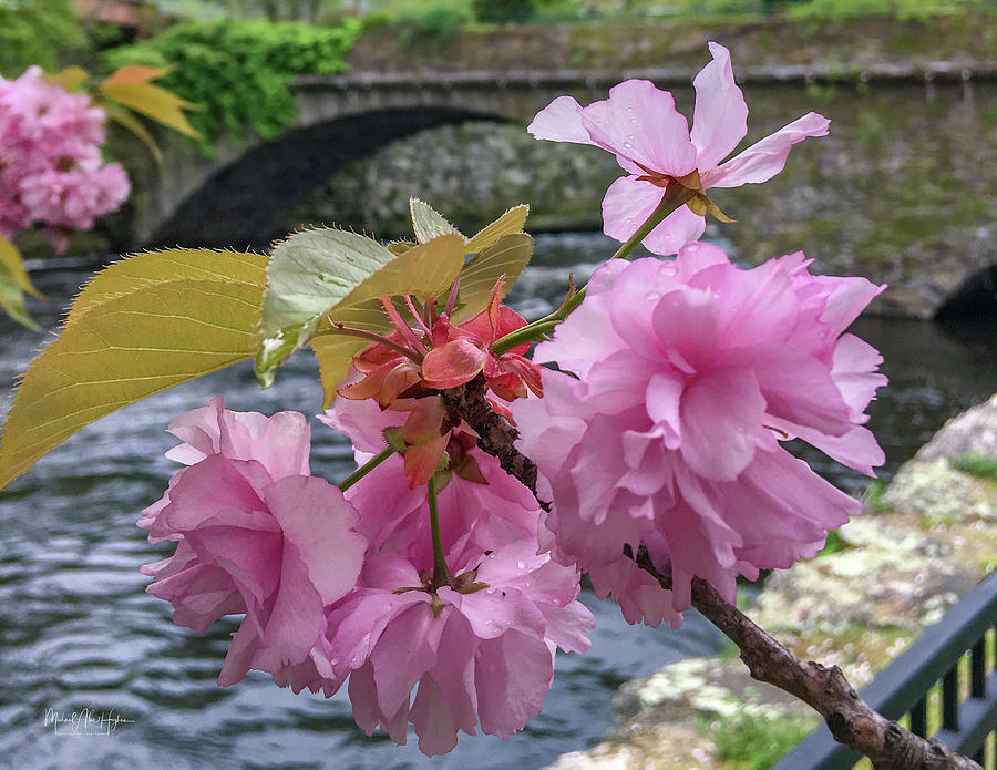 Beautiful Blossom by Michael Hughes
