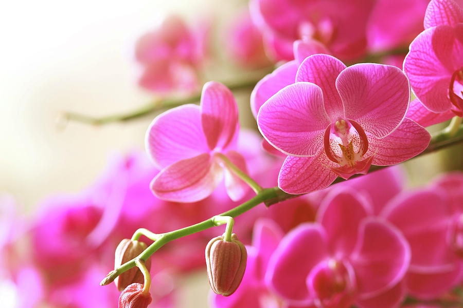 Blooming Pink Orchid On A Green Branch Photograph by Dreaming2004