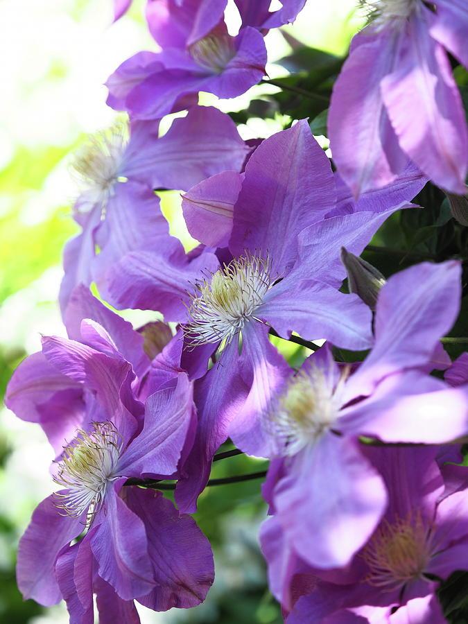 Blooming by Rachel Mirror