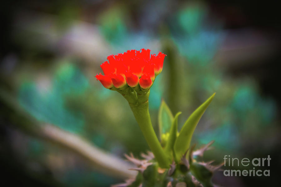 Blooming Red by Colleen Kammerer