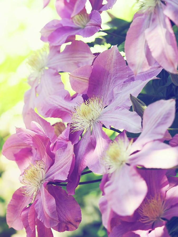 Blooming retro ver. by Rachel Mirror