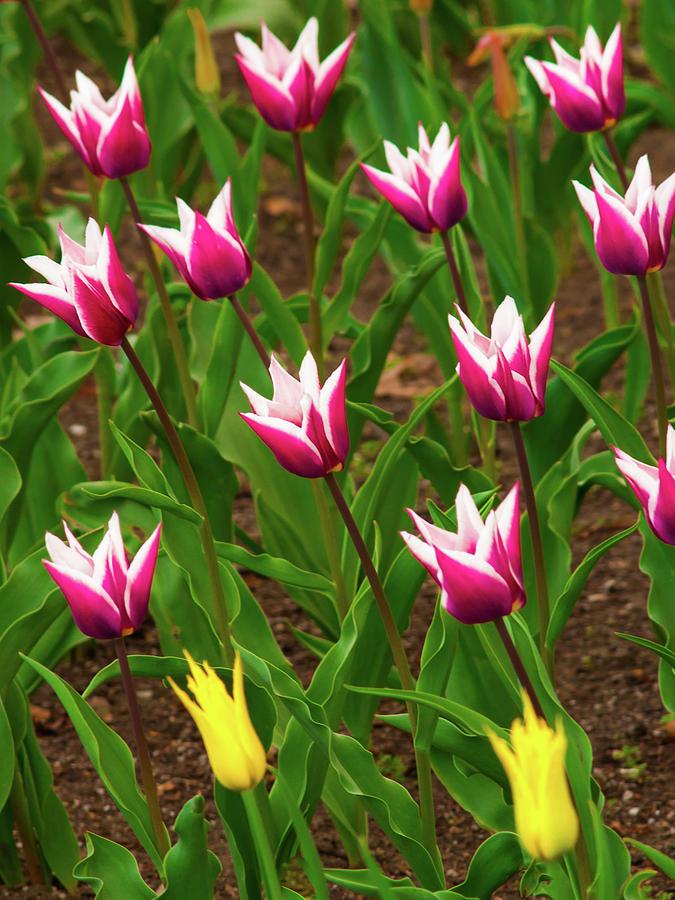 Blooming by Stewart Helberg