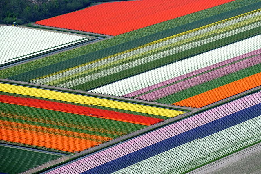 Blooming Tulips Field Photograph by Hollandluchtfoto