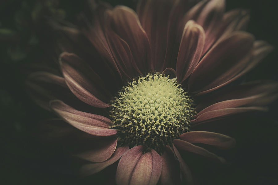 Blossom In The Darkness Photograph