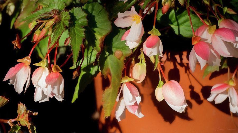 Blossom by John Rivera