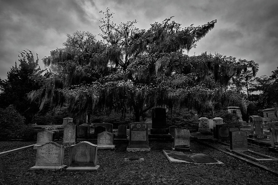 Blossoms at Bonaventure Cemetary by Jon Glaser