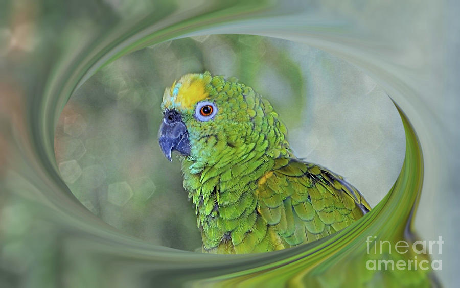 Blue Fronted Amazon Parrot Photograph By Elaine Manley