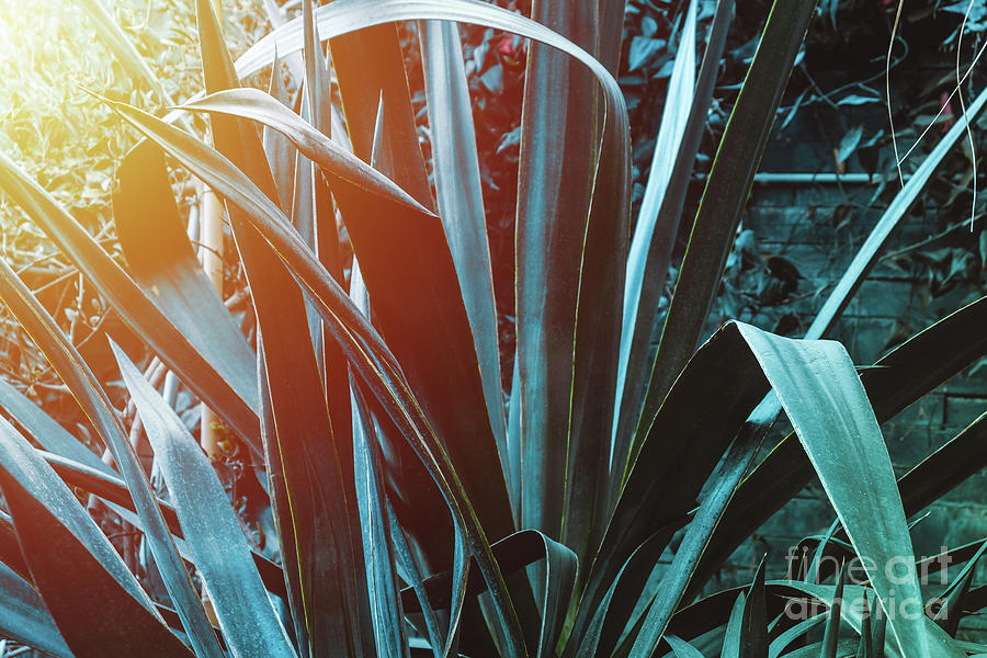 Blue Agave with sunlight by Marina Usmanskaya