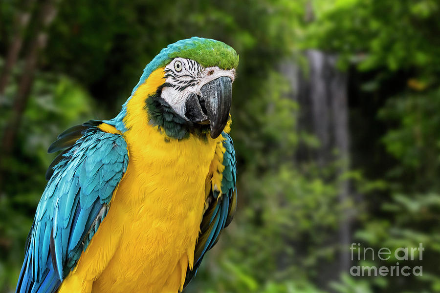 Blue and Gold Macaw by Arterra Picture Library