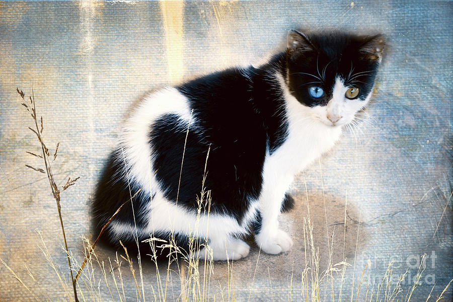 Blue And Green Eyes Photograph By Karen Beasley