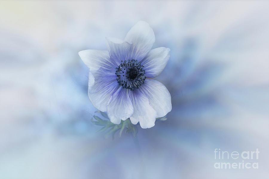 Blue Anemone by Elaine Teague
