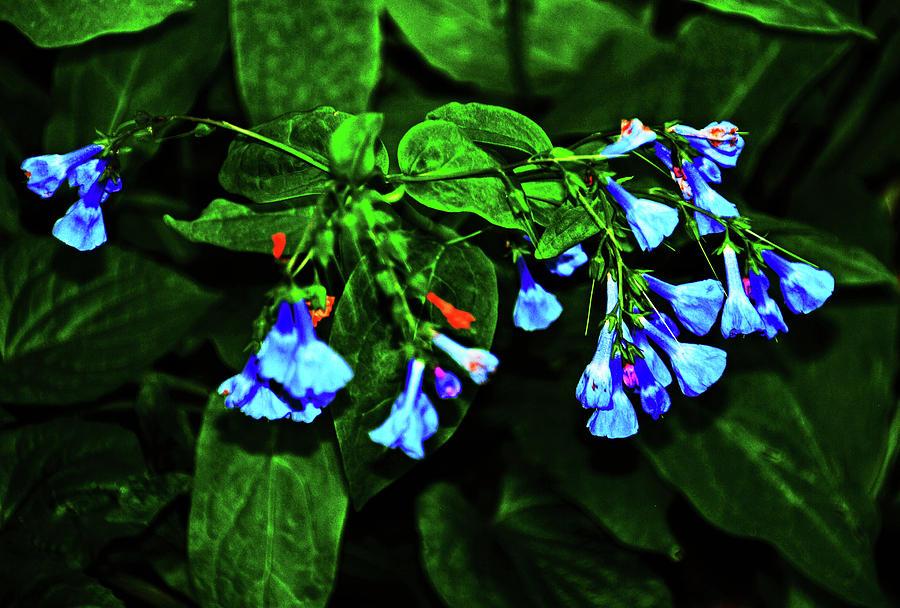 Blue bells by Bill Jonscher
