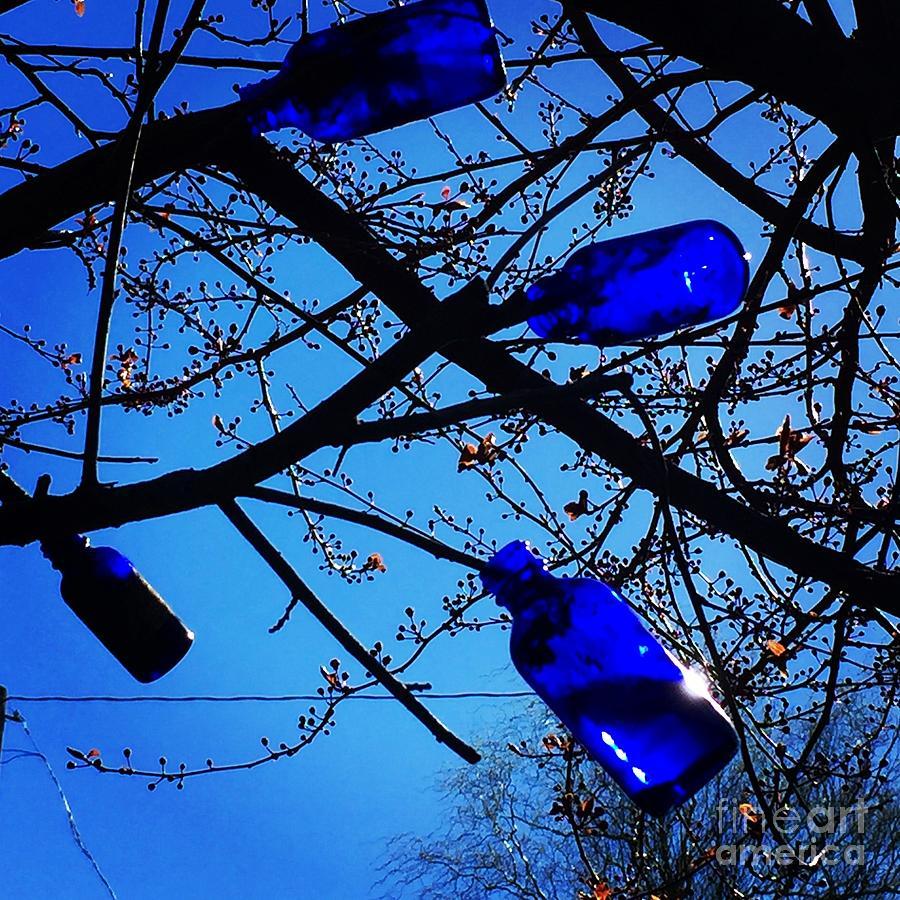 Blue Bottles in Tree by Suzanne Lorenz