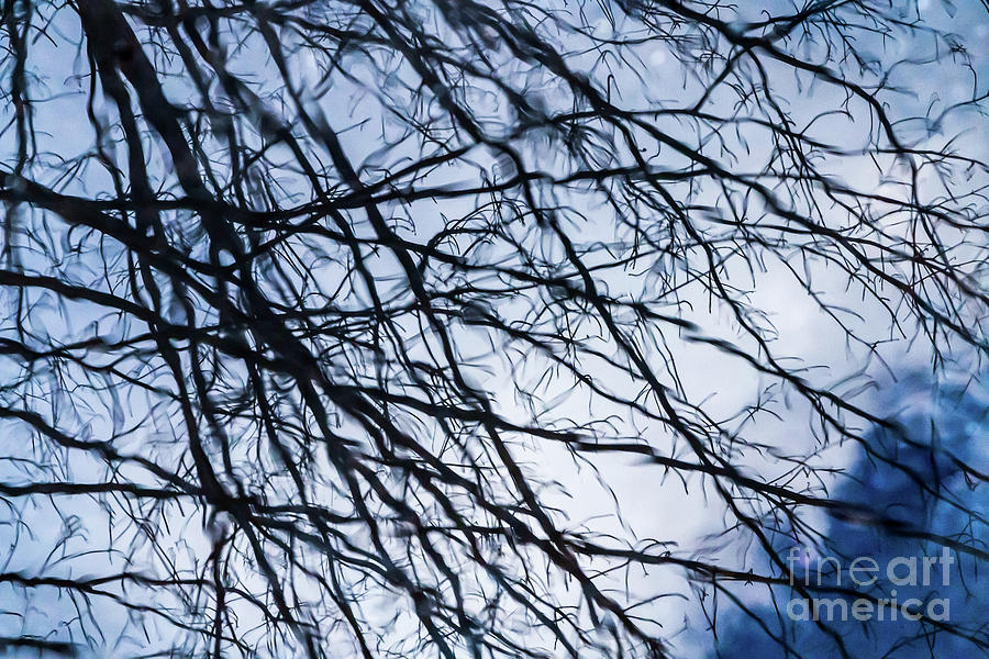 Blue Branch Dreams Photograph