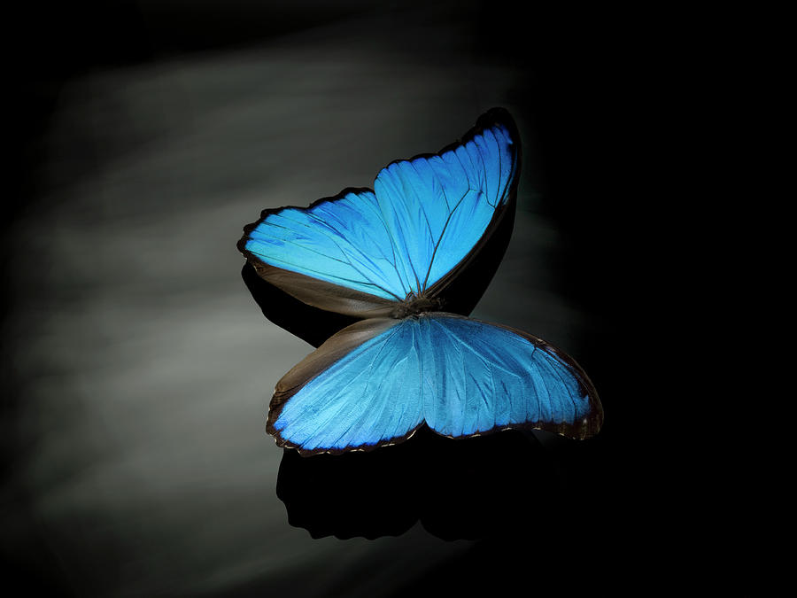 Blue Butterfly Photograph by Jonathan Knowles
