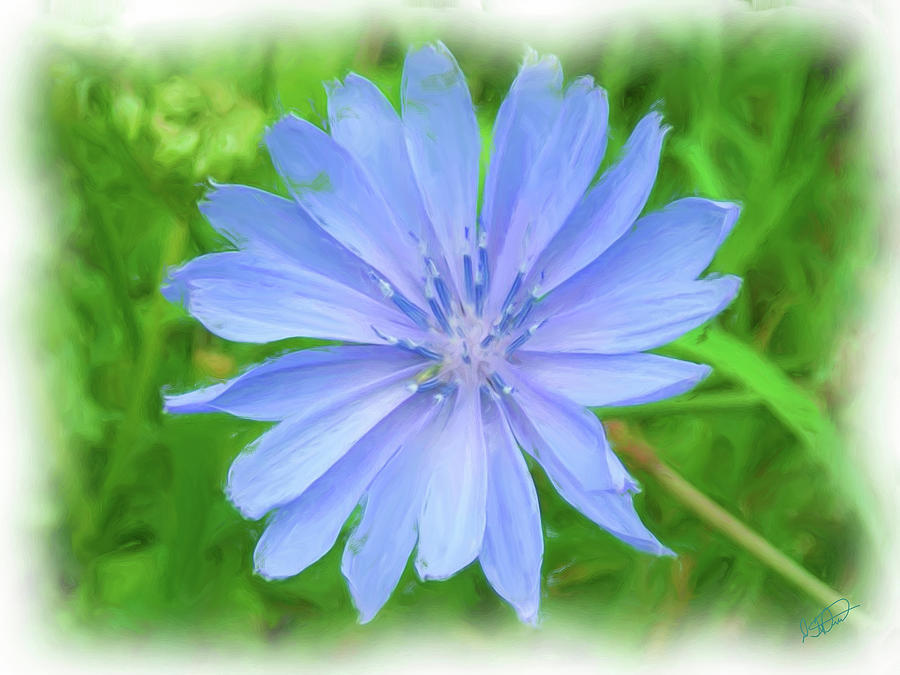 Blue Chicory - DWP091502004 by Dean Wittle