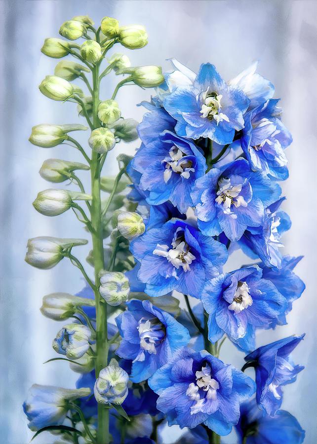Blue Delphinium by Steven Sparks