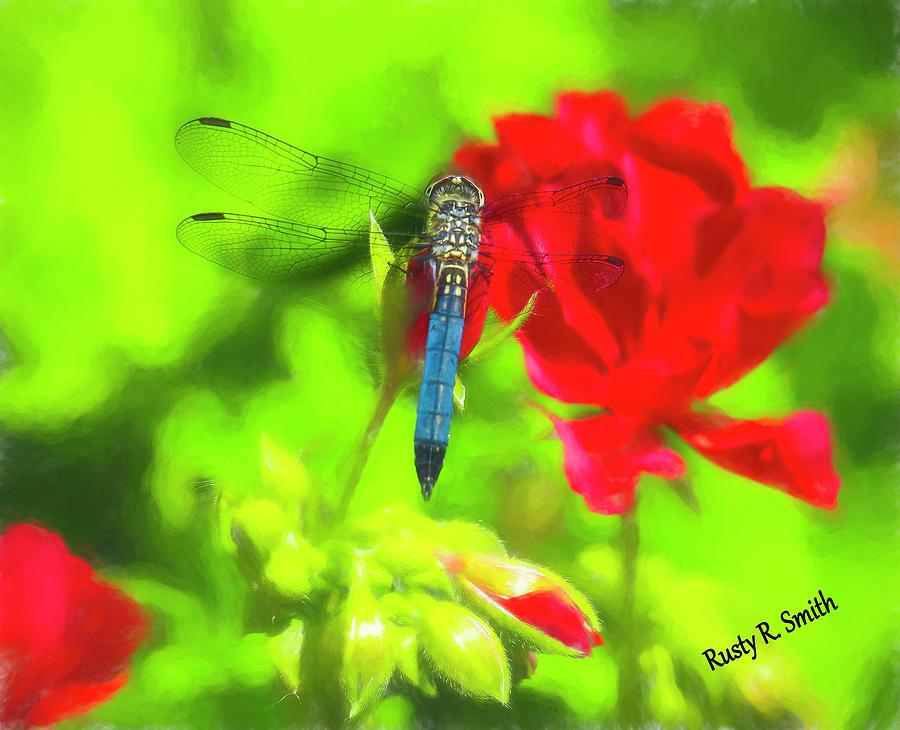 Blue Dragonfly on a red flower. by Rusty R Smith
