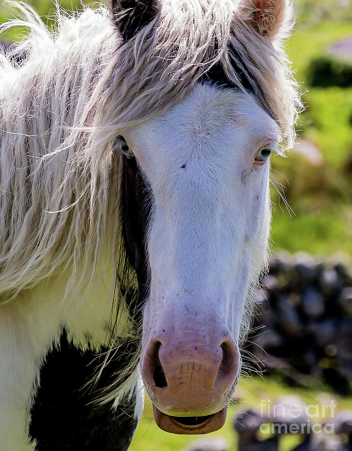 Blue Eyed Horse by Julie Chambers
