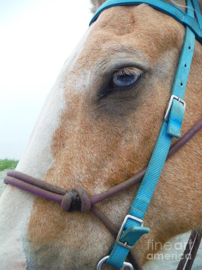 Blue Eyed Horse by Paddy Shaffer
