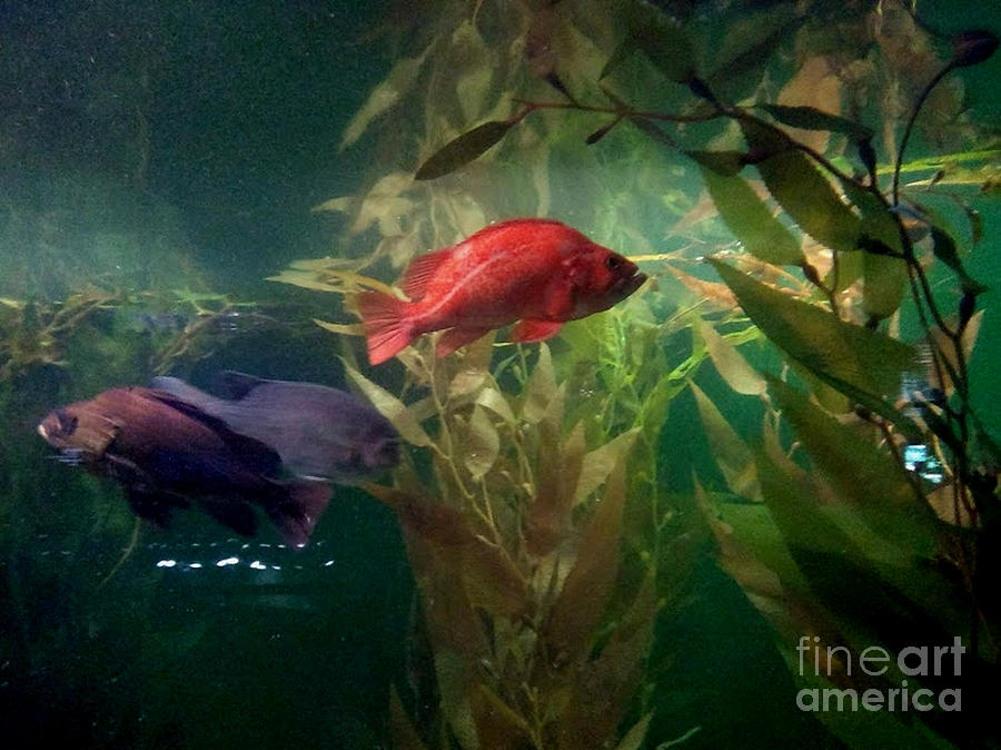 Blue Fish, Red Fish by Inscape Art Photography