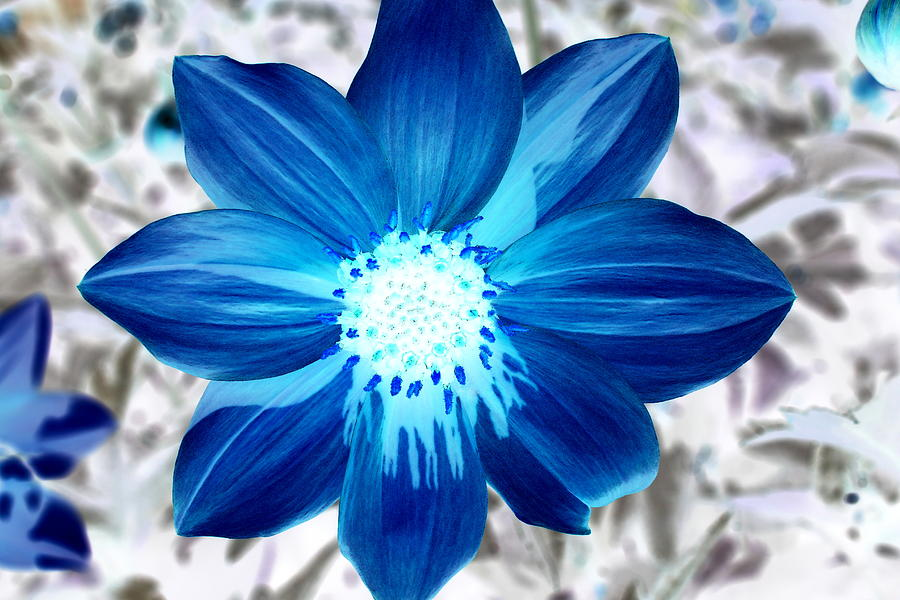 Blue Flower by Fiona Kennard