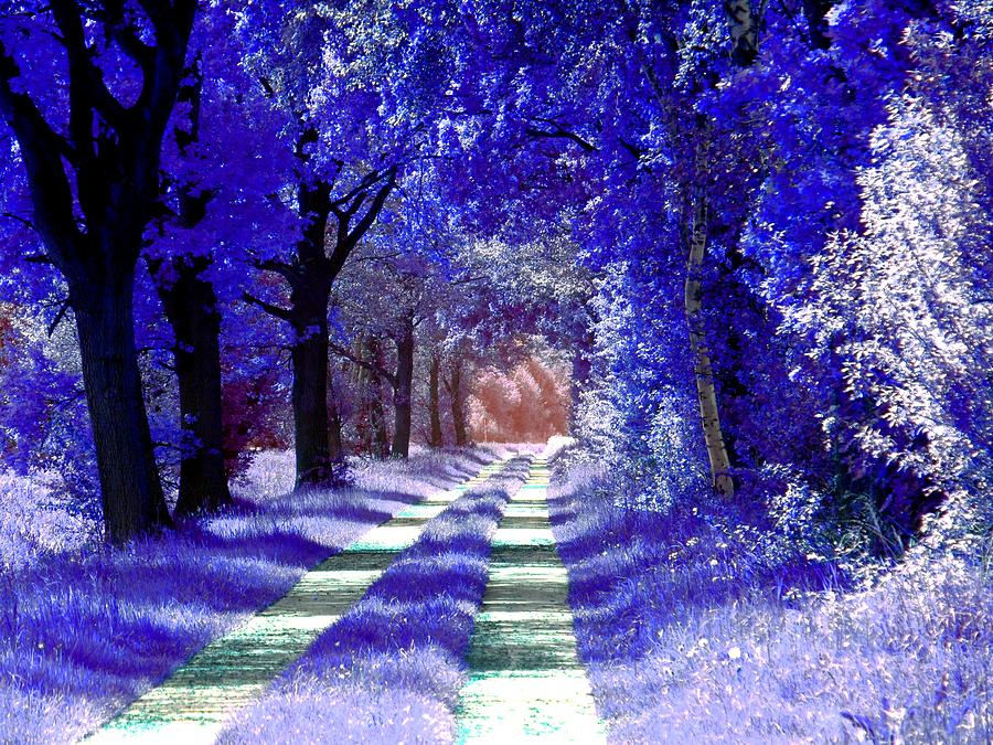 Blue forest in Winsen Luhe - Germany by Patricia Piotrak