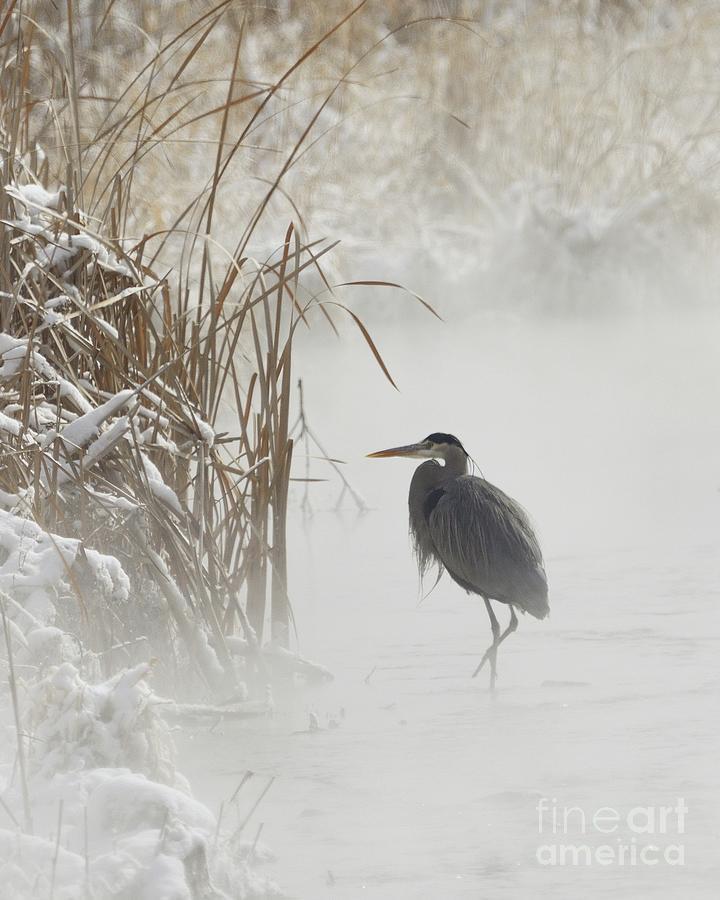 Blue Heron in the Mist by Robert Buderman