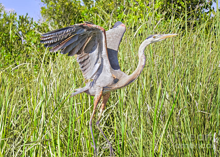 Coastal Birds Photograph - Blue Heron On The Rise by Judy Kay